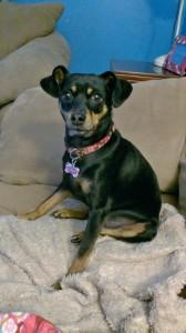 FLAVORx dog Luna
