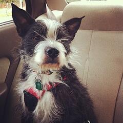 FLAVORx dog Dory